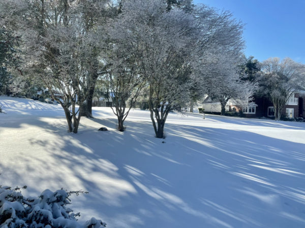 Our snow-covered front yard, where the snow is deep enough that the grass is hidden.